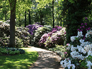 Images Germany Parks Rhododendron Bush Rhododendronpark Bremen Nature