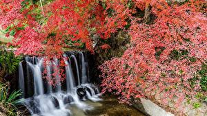 Bilder Japan Park Wasserfall Ast Felsen Shiga Natur