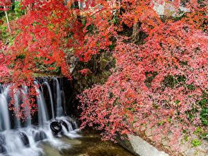 Bilder Japan Park Wasserfall Ast Felsen Shiga
