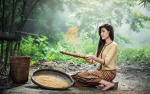 Bilder Asiatische Brünette Sitzend Getreide Mädchens