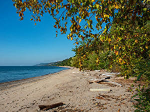 Hintergrundbilder Kanada Küste Ast Strand Toronto beach Lake Ontario Natur