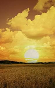 壁纸、、畑、空、朝焼けと日没、雲、太陽、