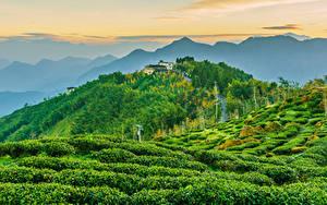 Fotos Taiwan Gebäude Acker Berg Hügel Strauch Natur
