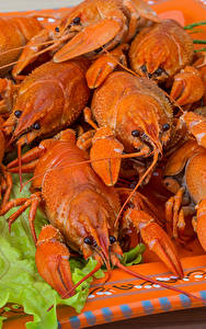 Fotos Flusskrebs Großansicht Lebensmittel