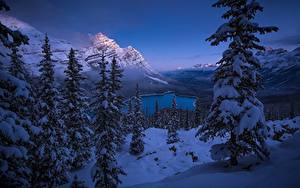 Hintergrundbilder Winter Gebirge Landschaftsfotografie Kanada Fichten Bäume Schnee Banff Peyto Lake