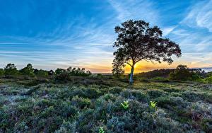 Fotos Landschaftsfotografie Sonnenaufgänge und Sonnenuntergänge Himmel Bäume Gras Highwood