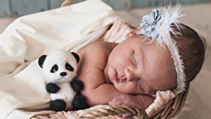 Bilder Teddybär Baby Schlafen Kinder