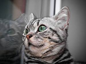 Hintergrundbilder Katzen Nahaufnahme Katzenjunges Spiegelung Spiegelbild Kopf Schnurrhaare Vibrisse