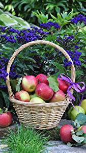Bilder Äpfel Weidenkorb Blatt