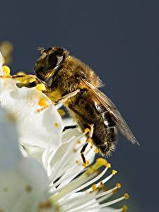Fotos Hautnah Bienen Insekten Tiere