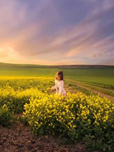 Hintergrundbilder Landschaftsfotografie Sonnenaufgänge und Sonnenuntergänge Felder Raps Lichtstrahl Kleine Mädchen Natur