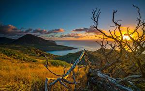 Bilder Tropen Sonnenaufgänge und Sonnenuntergänge Küste Landschaftsfotografie Hawaii Ast Wolke Hügel