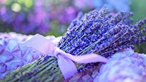 Bilder Lavendel Großansicht Sträuße Schleife Blüte