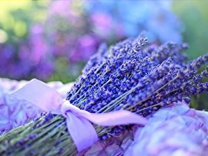 Bilder Lavendel Großansicht Sträuße Schleife