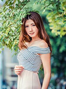 Hintergrundbilder Asiatisches Braunhaarige Ast Starren Unscharfer Hintergrund junge frau