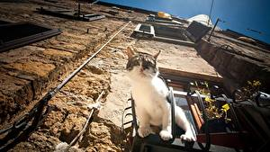 Fotos Katze Haus Fenster Mauer Untersicht Ansicht von unten ein Tier
