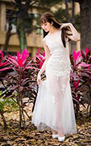Bilder Asiaten Braune Haare Kleid Mädchens