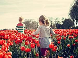 Wallpapers Fields Tulips Many Little girls Red Children