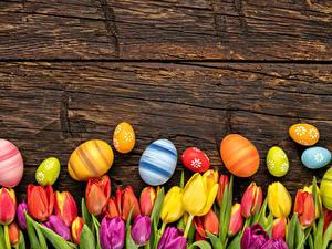 Bilder Feiertage Ostern Tulpen Bretter Ei Blumen