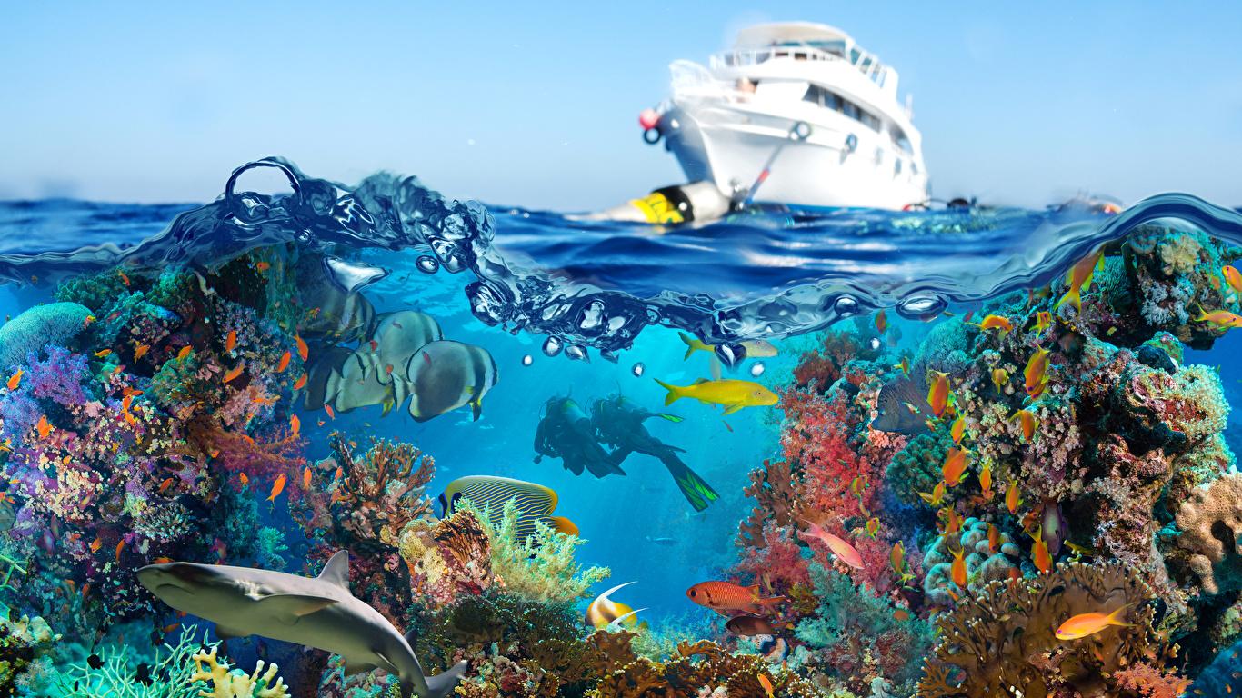 Fonds Decran 1366x768 Monde Sous Marin Corail Poisson Yacht