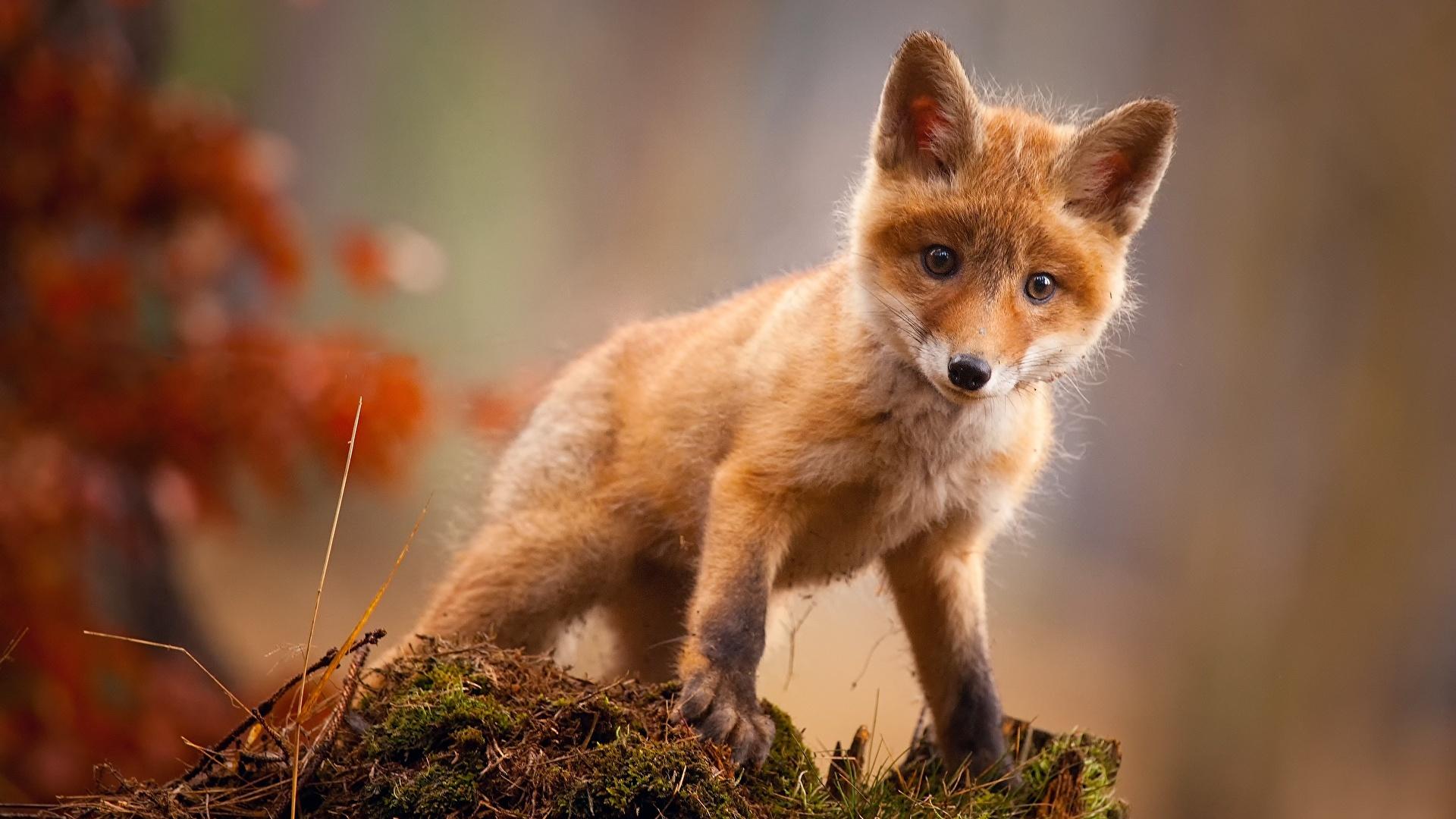 Süße tiere hintergrundbilder Herunterladen hintergrundbild