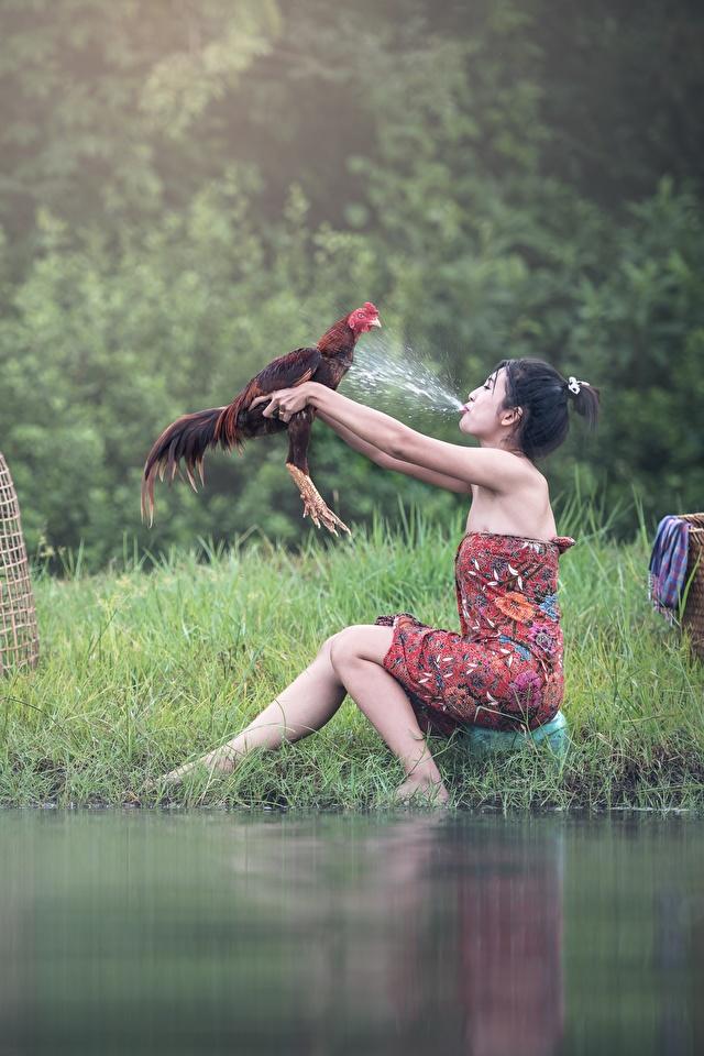 Bilder von Hahn Brünette Mädchens Spritzer Asiatische Gras Sitzend 640x960 sitzt sitzen