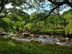 Bilder England Flusse Steine Gras Ast West Dart River Dartmoor Natur