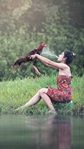 Wallpapers Rooster Asian Grass Water splash Brunette girl Sit Girls