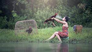 Fotos Hahn Asiatische Gras Spritzer Brünette Sitzend Mädchens