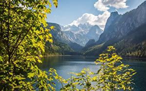 Papéis de parede Áustria Montanhas Lago Fotografia de paisagem Galho Penhasco Dachstein, Gosausee, Gosau
