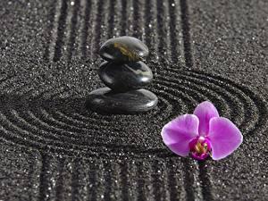Bilder Steine Orchideen Kreise zen Natur