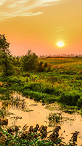 Wallpaper Canada Sunrises and sunsets Quebec Swamp Grass Sun
