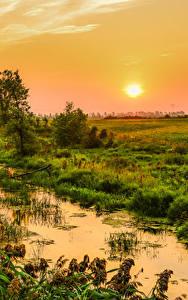 壁纸、、カナダ、朝焼けと日没、沼地、草、太陽、Quebec、