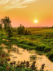 Bilder Kanada Sonnenaufgänge und Sonnenuntergänge Sumpf Gras Sonne Quebec
