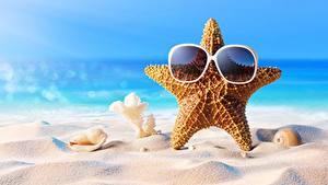 Fotos Seesterne Muscheln Sommer Brille Sand Natur