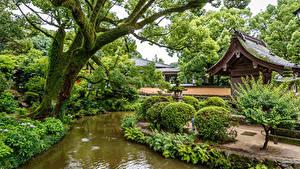 Bilder Singapur Park Teich Bäume Strauch Natur