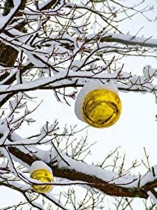 Bilder Winter Schnee Ast Kugeln