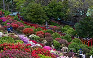 Fotos Japan Präfektur Tokio Park Rhododendren Strauch Natur