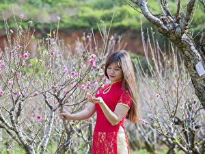 Hintergrundbilder Asiatische Garten Blühende Bäume Frühling Ast Braunhaarige Mädchens
