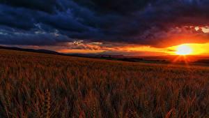 Hintergrundbilder Felder Sonnenaufgänge und Sonnenuntergänge Landschaftsfotografie Himmel Ähre Wolke
