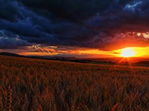 Hintergrundbilder Acker Sonnenaufgänge und Sonnenuntergänge Landschaftsfotografie Himmel Ähren Wolke Natur