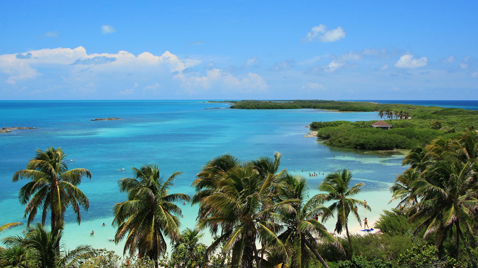 Picture Mexico Cancun Sea Nature Palm Trees Coast 1920x1080