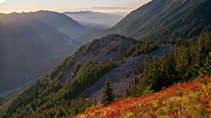 Bilder USA Gebirge Wälder Texas Gras Natur