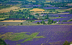Hintergrundbilder Acker Lavendel Natur
