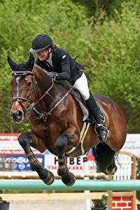 Bilder Hauspferd Pferdesport Sprung Uniform Helm sportliches