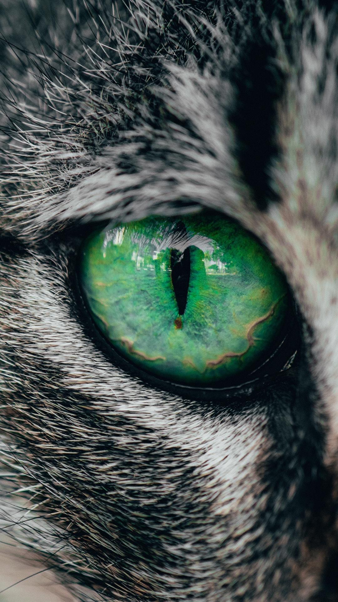 Fotos von Hauskatze Augen Tiere Nahaufnahme 1080x1920 für Handy Katze Katzen hautnah ein Tier Großansicht