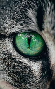 Hintergrundbilder Augen Hautnah Hauskatze ein Tier