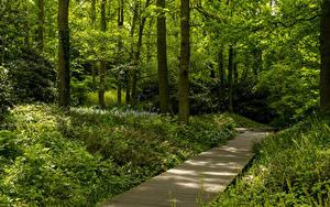 Bilder Niederlande Park Bäume Gras Keukenhof Gardens Natur