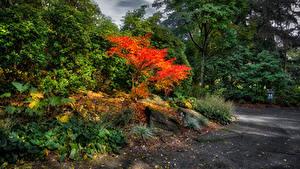 Hintergrundbilder Kanada Park Vancouver Bäume Strauch VanDusen Botanical Garden Natur