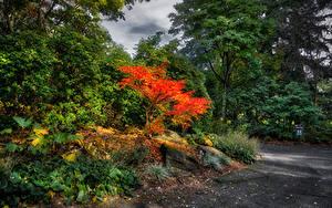 Hintergrundbilder Kanada Park Vancouver Bäume Strauch VanDusen Botanical Garden